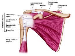 supraspinatus tendon tear treatment