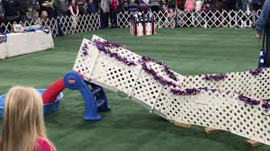 2017-01 Novi Dog Show - YouTube