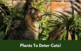 4 best plants that will deter cats and