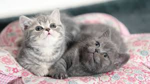cute kittens and puppies cuddling. Contemporary Cute Funny And Cute Kittens Cuddling Compilation 2017 To And Puppies