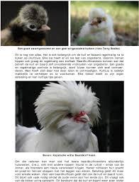 Nederlandse Baardkuifhoenders Blijven Aantrekkelijk Pdf