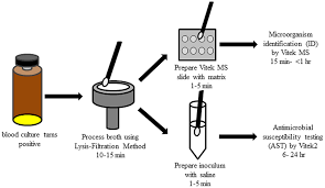 Process Flow Diagram For Identification And Antimicrobial