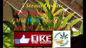 Floraflex Nutrients Feed Chart Cultilux Floraflex Epic Grow Day 8 Update Youtube