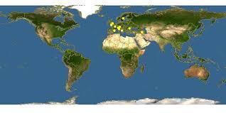 Aster linosyris - Goldilocks Aster -- Discover Life mobile