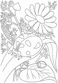 A set of thick line coloring pages just right for little hands. Spring Coloring Pages Printable Elegant Free Printable Spring Coloring Pages For Adults At Meriwer Coloring