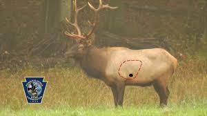 Archery Elk Shot Placement