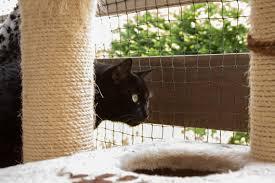 Katzen Jugendtierschutz