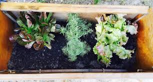 so you want to start an herb garden but you feel like you have a brown
