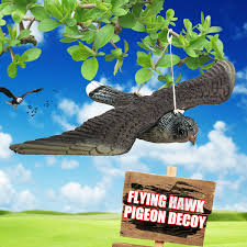 magpie decoy hunting bait shooting trap