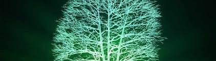 Glow In The Dark Trees To Replace Street Lights Glowing Trees Could Help Light City Streets Quantumrun