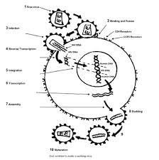 Pathophysiology Aids Hiv