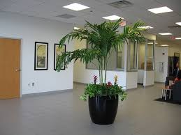 office greenery. Wonderful Greenery Interior Plants Create A Working Atmosphere Office Productivity Increases  With Intierior Plants In Greenery