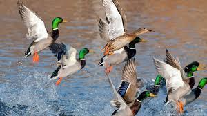 """Képtalálat a következőre: """"madarak és víz kapcsolata képek"""""""