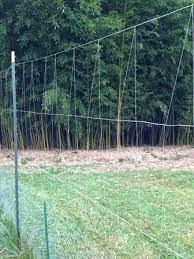 fishing line deer fence update deer