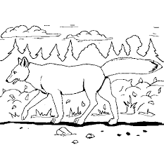 Small Picture Coyote coloring page Coloringcrewcom