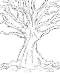 Image result for tree sketch