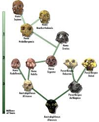 Human Family Tree Chart That Science Guy Chart Of The Evolution Of Man Homo Man