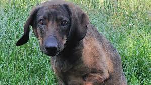 Jäger Starb Hund Wachte Vier Tage An Seiner Seite Kroneat