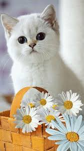 gif s cute white kitten and daisies