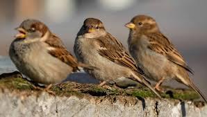 Życie lasu. Ptaki