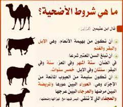 العمر الجميل - شروط أضحية عيد الأضحى أن تكون الأضحية من...