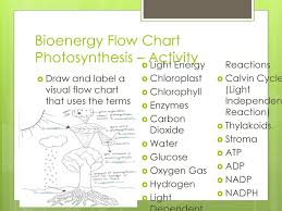 Cell Energy Flow Chart Photosynthesis And Cellular Respiration Answer Key Photosynthesis Ppt Download