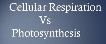 Complete The Chart For The Stages Of Cellular Respiration Difference Between Cellular Respiration And Photosynthesis