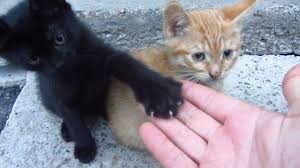 kittens. Beautiful Kittens Kittens Live Under A Concrete Slab With N