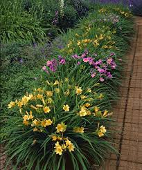 47 best Лилейники Лилии Дизайн Сада   Hemerocallis additionally Daylilies by mailbox Heather we should do this    My Garden also Daylilies  Daylilies   Jean's Garden in addition Landscaping Ideas  A Flower Garden for Corner Spaces also 47 best Лилейники Лилии Дизайн Сада   Hemerocallis in addition Best 25  Daylily garden ideas on Pinterest   Driveway border  Lily together with Designing a Garden With Foliage   Gardens  Fern and Landscaping as well Best 25  Daylily garden ideas on Pinterest   Driveway border  Lily further Best 25  Daylily garden ideas on Pinterest   Driveway border  Lily in addition 28 Best images about Landscaping on Pinterest   Wandering jew in addition Viette's    panion Planting with Daylilies. on daylily bed design