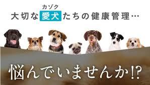 タータ(ta-ta)の口コミ体験レポ|愛犬用のコラーゲンは本当に良いのか使ってレビューします|