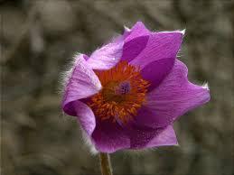 close up seedheadx