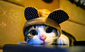 Tổng Hợp 100+ hình ảnh mèo con dễ thương, cute nhất hiện nay