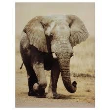 walking elephant canvas wall art on african elephant canvas wall art with oriental furniture 32 in x 24 in walking elephant canvas wall