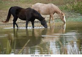 Image result for phrase about horse and pond