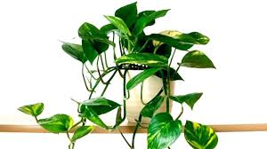 common house plants identification tropical house plant identification house plants names common household plants household plants common house plants