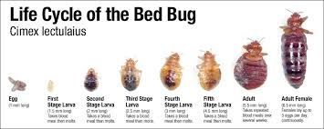 Bedbugs Images Disease Outbreak Control Division Bed Bugs