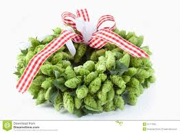 Hops For Decoration Wreath With Hops Wheat And Glasses Of Beer Floral Composition