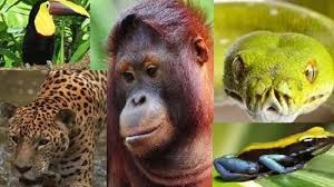 amazon river animals and plants. And Amazon River Animals Plants