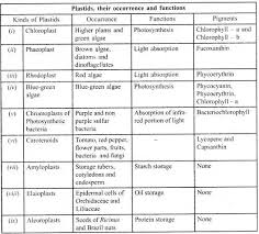 Cells And Their Functions Chart 45 Described Cell Organelles With Their Functions
