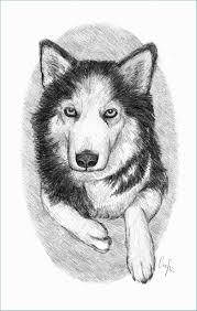 54 Cani Da Disegnare Punchbuggylife