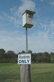 Free Bluebird House Plans   Multiple DesignsBluebird House plans