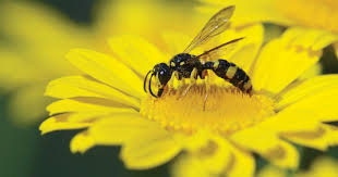 how to attract beneficial insects to the garden