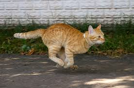 Image result for images for the cat ran out the door