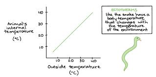 Endothermy Vs Ectothermy Venn Diagram Endotherms Ectotherms Article Khan Academy