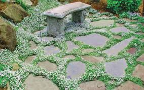 grow between stepping stones pavers