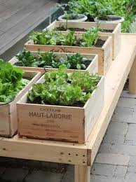 3. Plant herbs in old wine boxes for a rustic look.