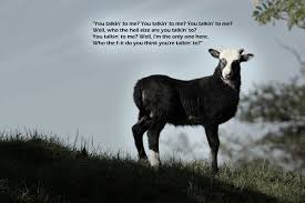 Fnnny Mountain Goats Quotes. QuotesGram