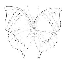 Butterfly Cutouts Template Printable Butterfly Templates And Shapes Free Template Mask