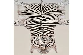authentic african zebra skin rug taxidermy photo 1