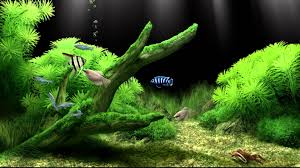 Fish Tank Dream Aquarium Virtual Fishtank 2 Youtube